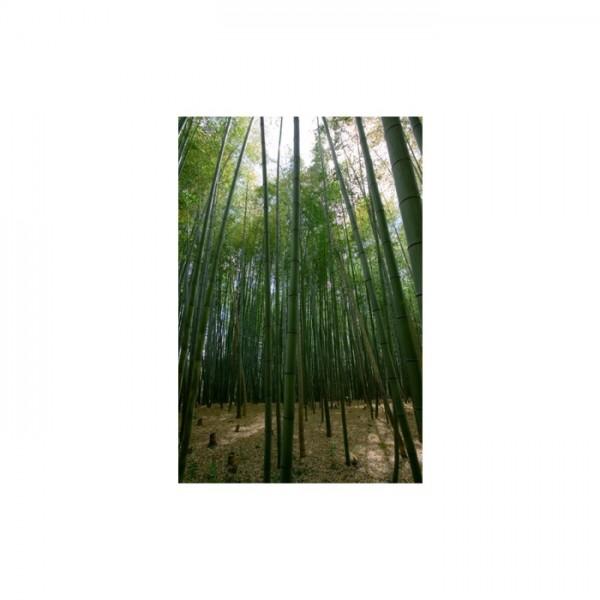 Ağaçlar 89x140 cm Duvar Resmi