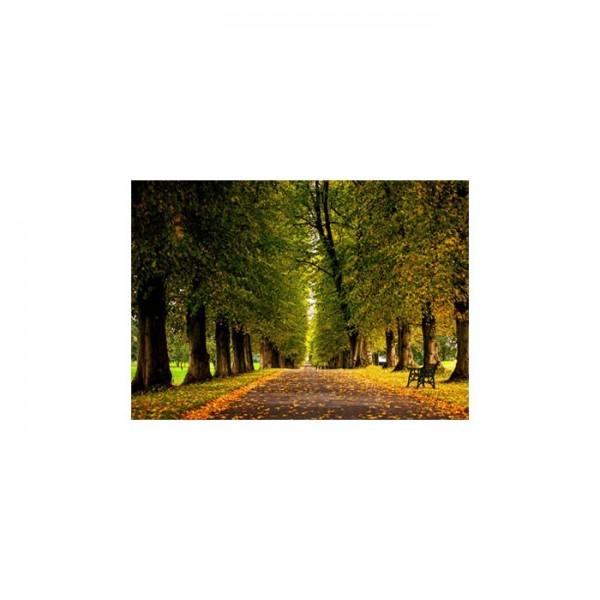 Ağaçlı Yol Notebook Sticker