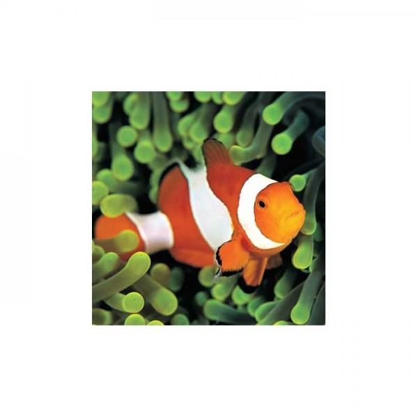 Balık Bulaşık Makinesi Sticker