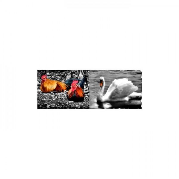 Beautiful Animals 2 Parça Kanvas Tablo 60X40 Cm