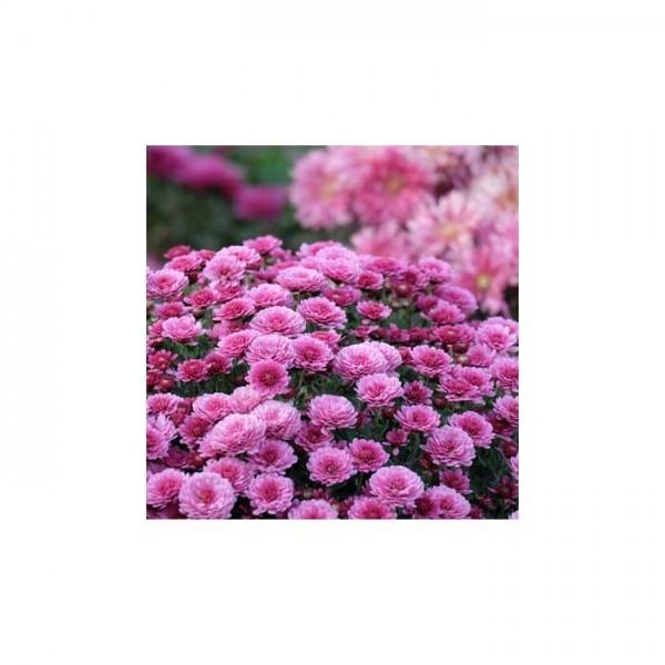 Çiçek Bahçesi Bulaşık Makinesi Sticker