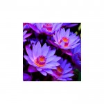 Çiçeklerin Dansı Bulaşık Makinesi Sticker