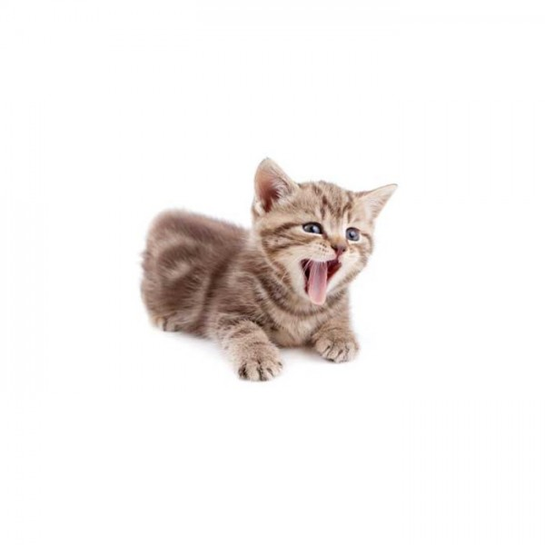 Esneyen Kedi Bulaşık Makinesi Sticker